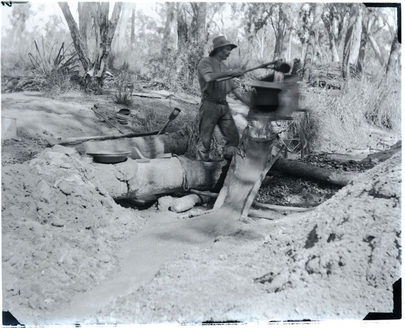 Miner using a combination cradle and sluice, Oaks Goldfield